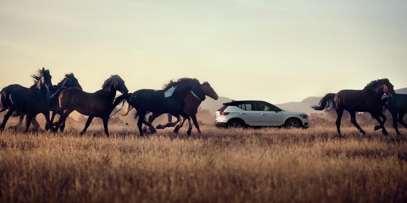 XC40 con caballos